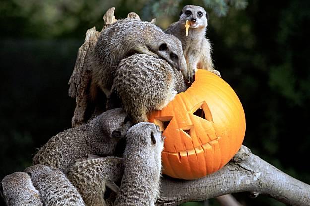 Happy Halloween Orange Juicers!