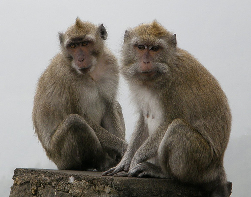 """""""Top Two"""" elections will make monkeys of us all! What effects will Prop. 14 have on our electoral politics here in California? The """"Top Two"""" measure passes easily. Starting in […]"""