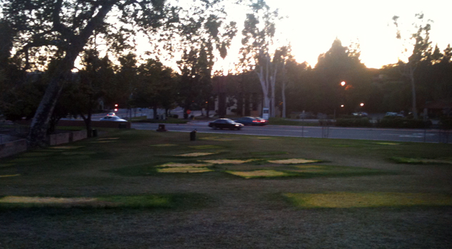 Occupy Fullerton moves out, leaves grass that will recover