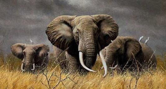 elephants kipling