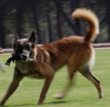 dog holding gun
