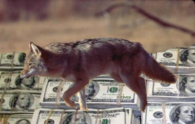 Coyote on money
