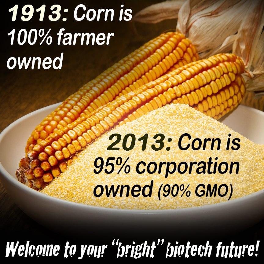 Monsanto Gmo Foods List Bt Corn