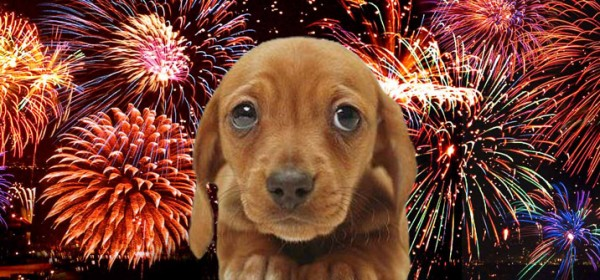 Fireworks Pup