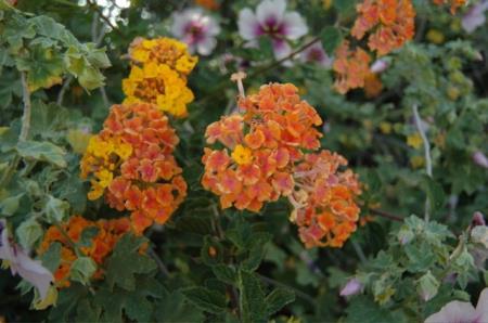 Yucaipa Valley Flowers