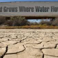 """California is experiencing the most severe drought in history. Ninety-five percent of California is listed as """"extreme drought."""" This didn't happen over night and anyone who pays even a little […]"""