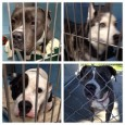 """. . . It's an old and heartbreaking debate: Whether or not there should be animal """"kill shelters,"""" which euthanize residents in order to save space and control population. Animal […]"""
