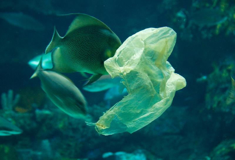 bahrani plastic bag 2