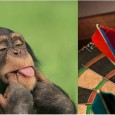 . . . by Debbie Cook; cross-posted from Surf City Voice. Give me a chimpanzee with a dart board and I'll give you a water demand forecast about as reliable […]